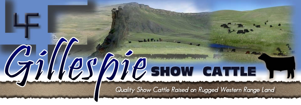 Gillespie Show Cattle, Ethridge MT